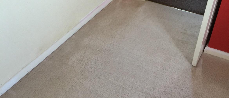 Carpet Cleaning Panies In Carlisle Pa Carpet Vidalondon